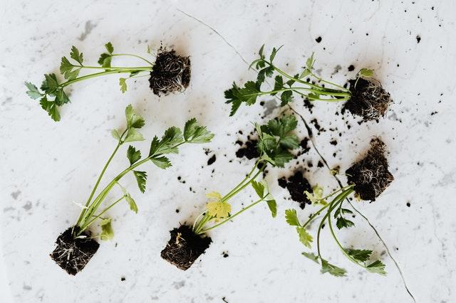 Blanda och matcha växter med blommor